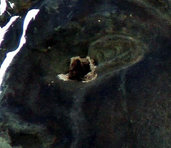 Condizioni di degrado del Vittorioso di Torremaggiore FG - www.torremaggiore.com -