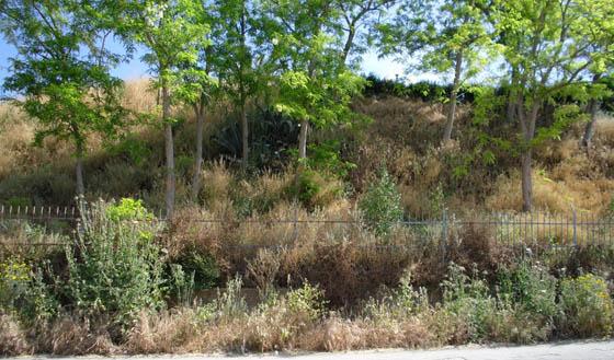 Approvato regolamento per adottare le aree verdi a Torremaggiore
