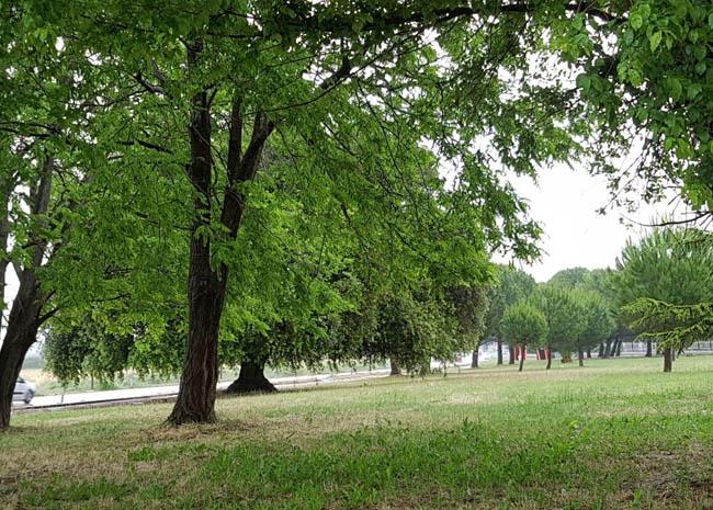 La grande quercia di Torremaggiore sarà presente nel calendaio 2021 degli alberi monumentali italiani: classificata al secondo posto tra i migliori scatti