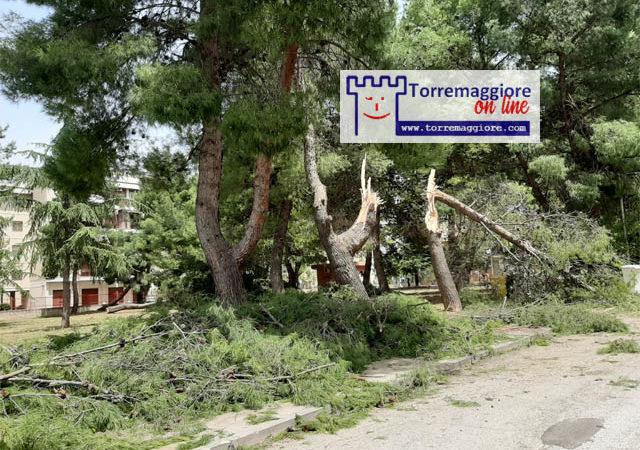 Alberi caduti ed altri danni a causa delle forti raffiche di vento a Torremaggiore