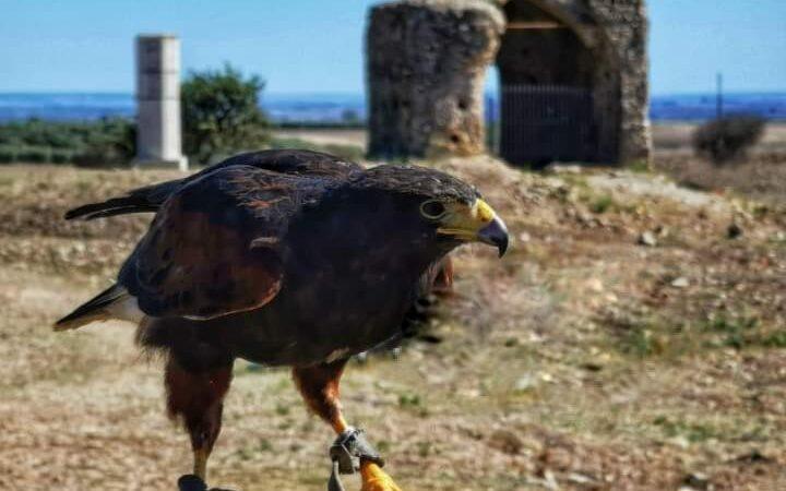 Scavi illeciti a Castel Fiorentino di Puglia, denuncia dell'Associazione Insieme per Fiorentino di Torremaggiore al Comando Carabinieri Nucleo di Tutela del Patrimonio Culturale