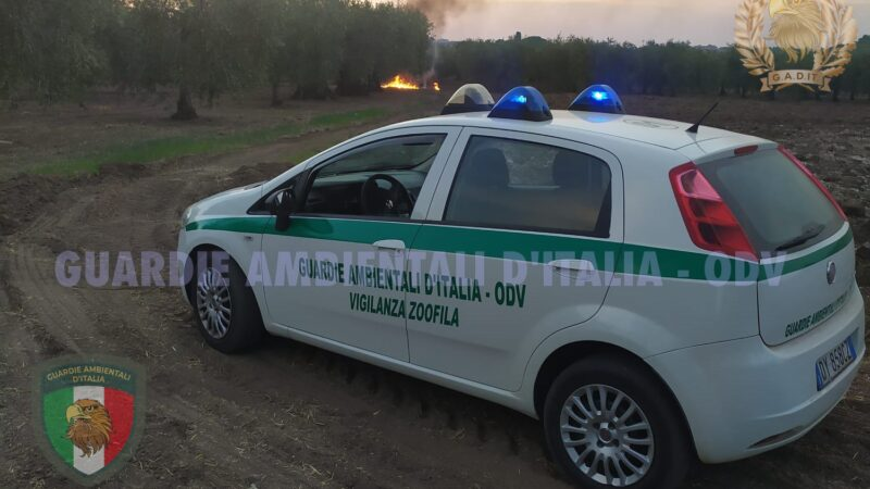 Intervento delle Guardie Ambientali D'Italia per un incendio di tubi di plastica a Torremaggiore in Contrada Cisterne